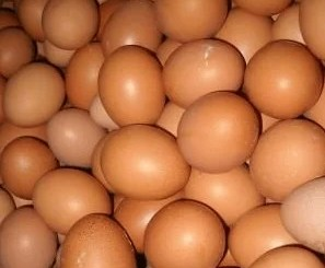 FG Award Tuns Farm 25B Naira Contract to supply Eggs without Due Process