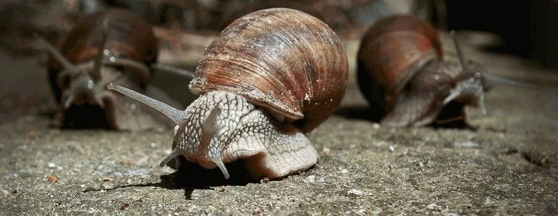 Snail Farming - How to Start a Lucrative Snail Business and Make Huge Profits