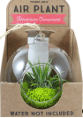 Air Plant Terrarium Ornament, $7.99
