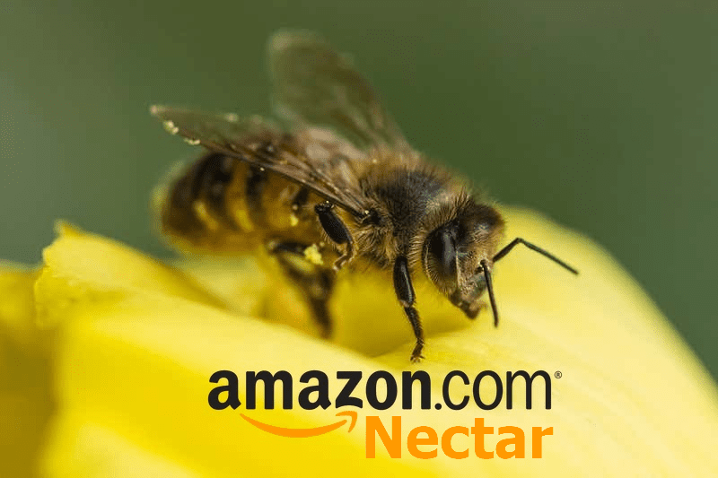 Amazon Nectar – New Product from Amazon….nothing to do with Bees