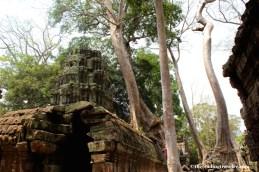 ta prohm tomb raider temple angkor wat
