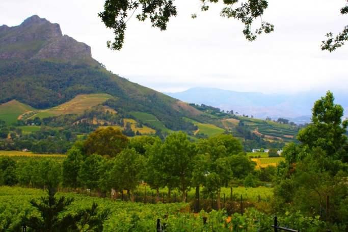 wine in africa