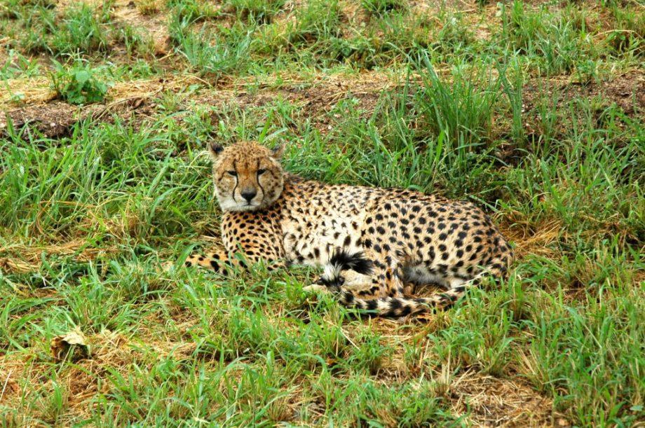Besøg i Hoedspruit Endangered Species Center