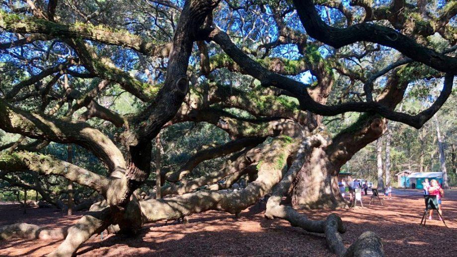 Angel Oak Charleston