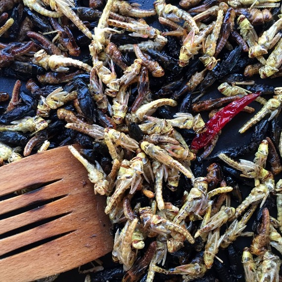 , Edible Insects Take the Spotlight, The Travel Bug Bite