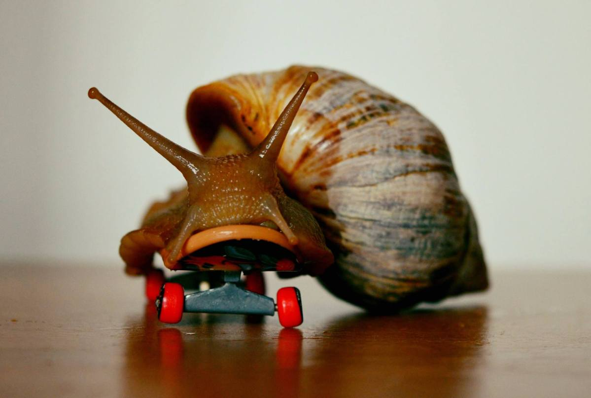Why Snails Make Great Pets – GALs