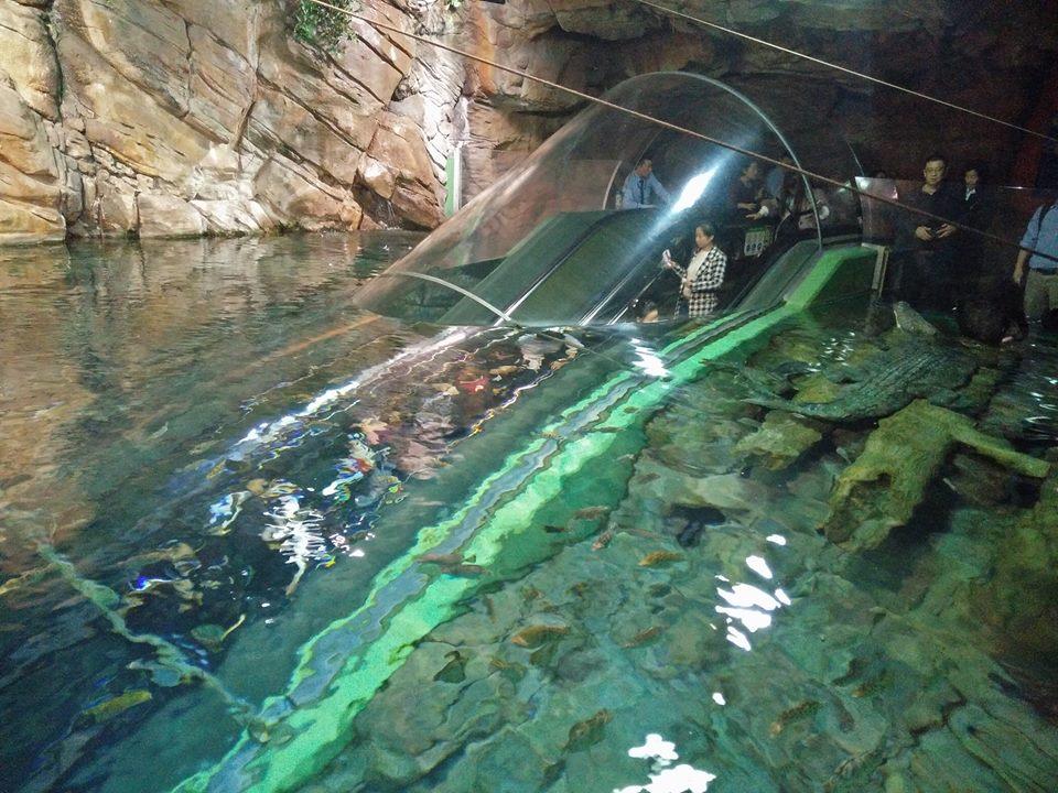 , Shanghai Ocean Aquarium