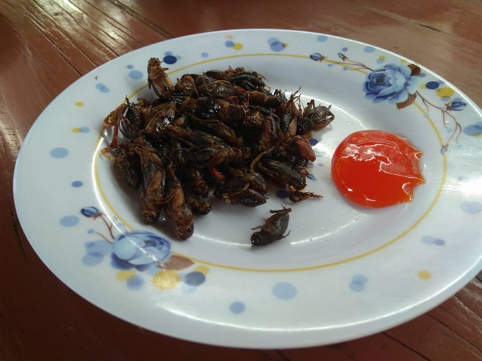 , Da Lat Countryside Tour: Cricket Farm, The Travel Bug Bite