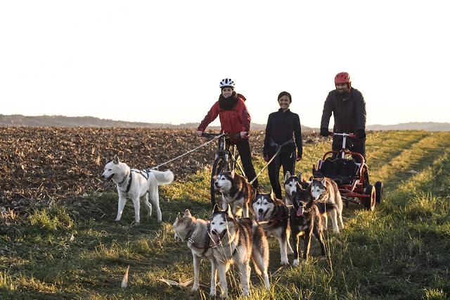 , Volunteering at a Dogsled Farm – Snowdragons, Austria Part 4 (Guest Post), The Travel Bug Bite
