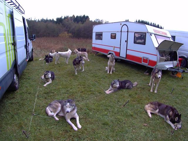 Volunteering at a Dogsled Farm – Snowdragons, Austria – Part 3 (Guest Post)