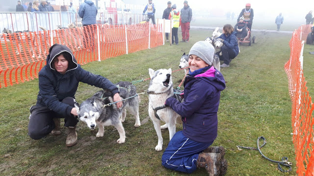 , Volunteering at a Dogsled Farm – Snowdragons, Austria Part 5 (Guest Blog), The Travel Bug Bite