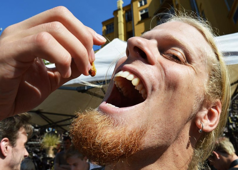 , Mealworms? Disgusting! – an international sample from Prague, The Travel Bug Bite, The Travel Bug Bite