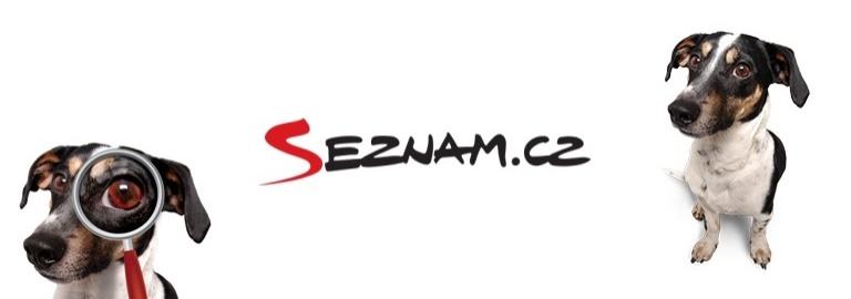SEZNAM.CZ, THE CZECH SYNONYM FOR INTERNET