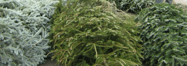 , CHRISTMAS TREE RECYCLING IN PRAGUE, The Travel Bug Bite