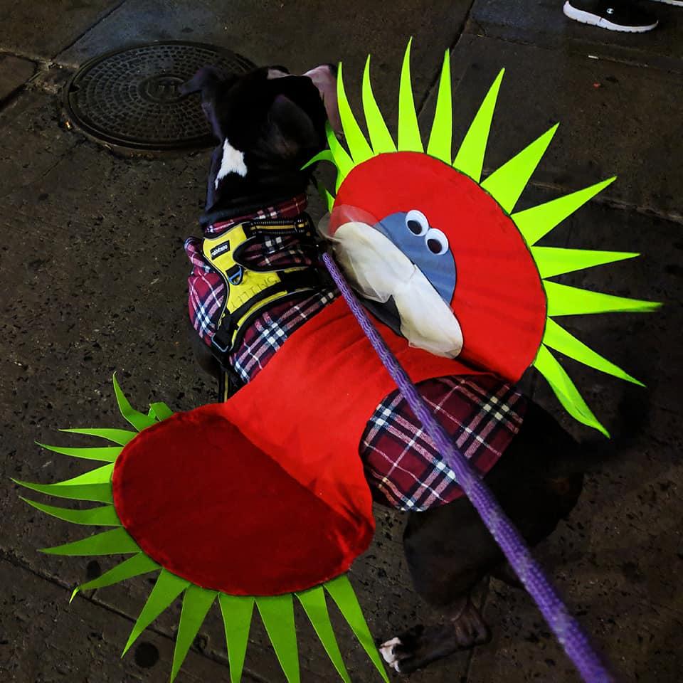 , Happy Halloween: Smiley's Dog Costumes!, The Travel Bug Bite