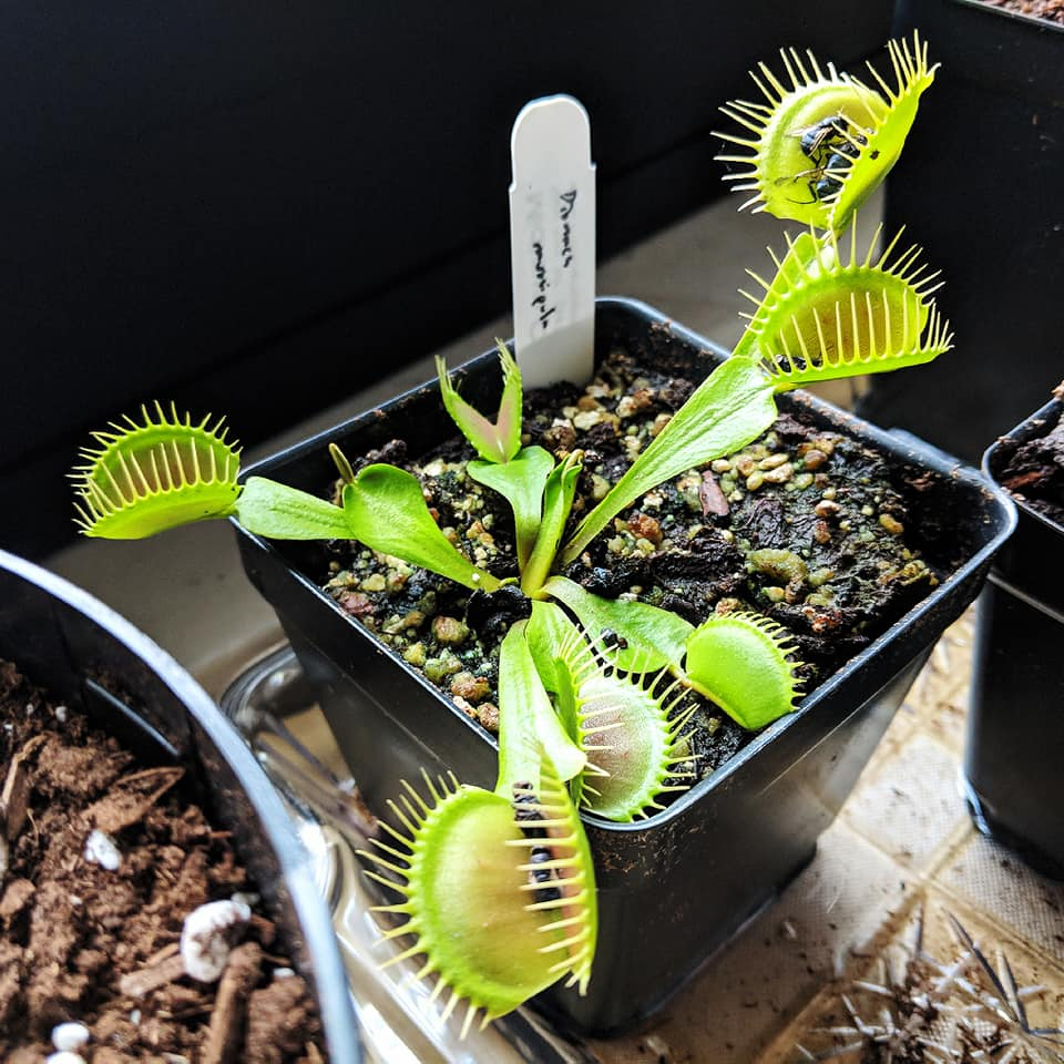 , Buying Carnivorous Plants in NYC, The Travel Bug Bite
