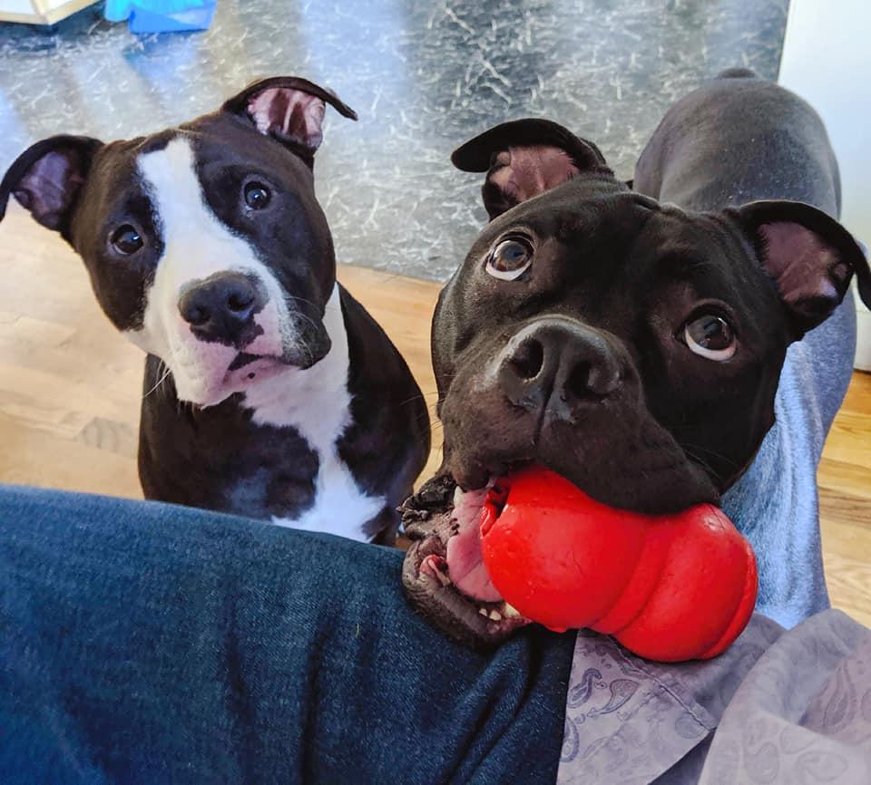 Bullymake Box, Bullymake Box: Dog Toys Review, The Travel Bug Bite