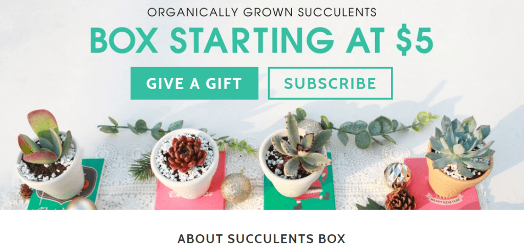 Succulent Subscription Box, Succulent Subscription Box – Yay or Nay?, The Travel Bug Bite