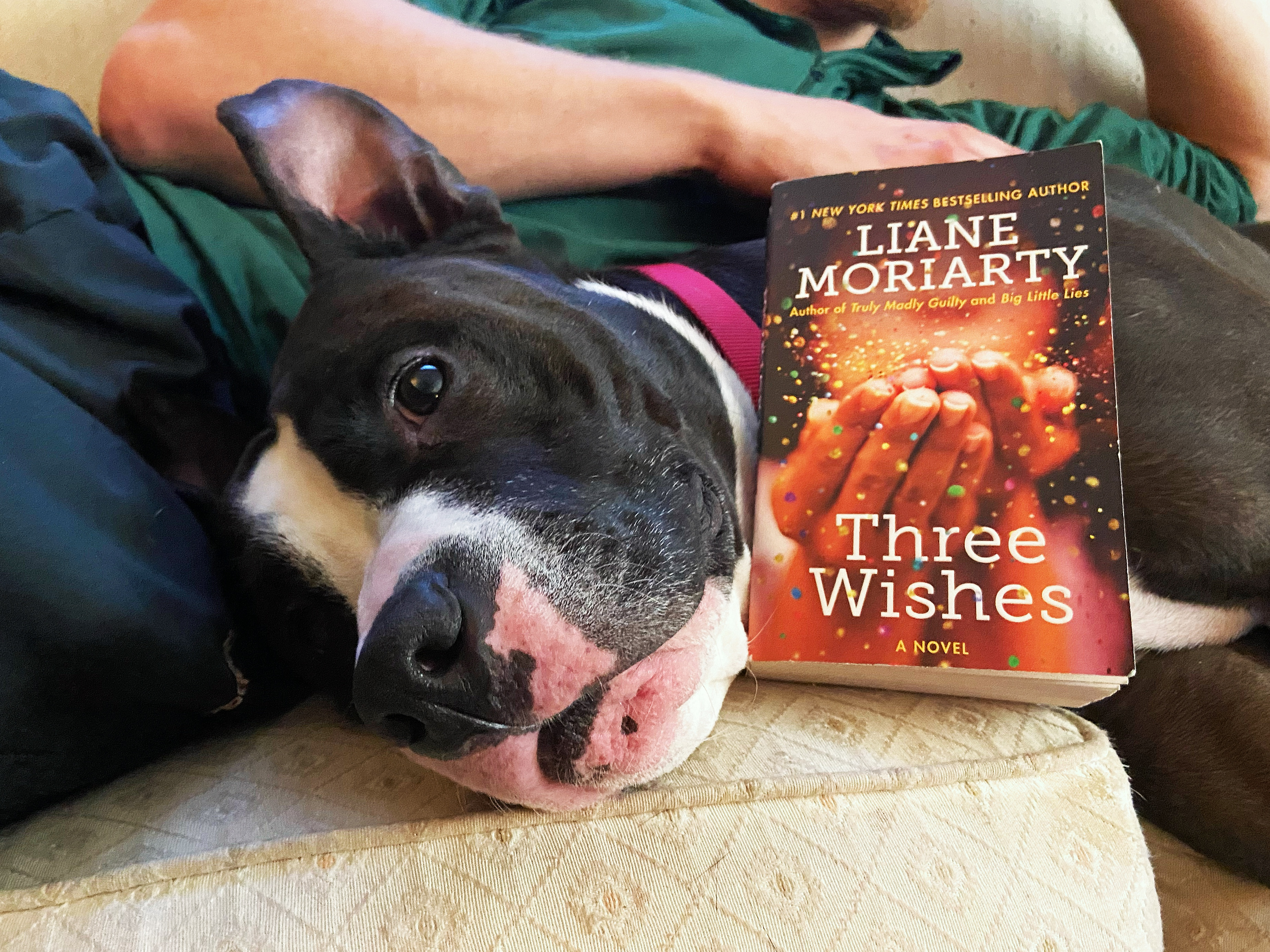 Three Wishes, Three Wishes by Liane Moriarty: Book Review, The Travel Bug Bite