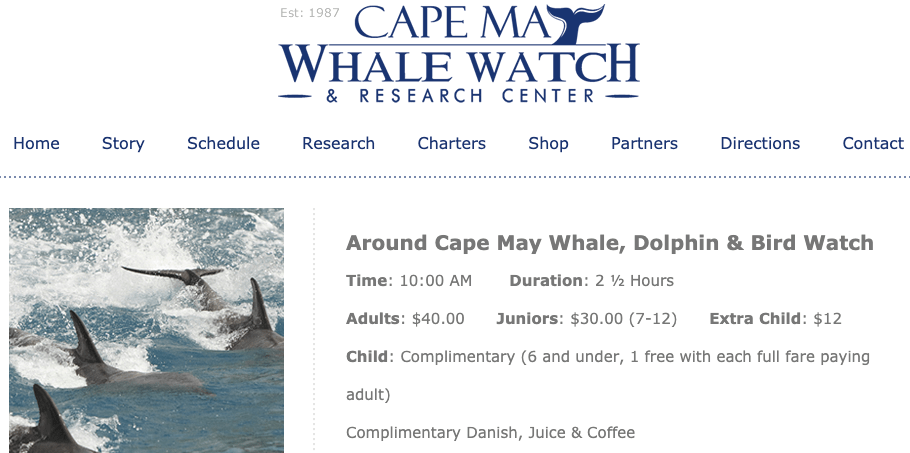 Whale & Dolphin Watching, Whale & Dolphin Watching in Cape May, New Jersey, The Travel Bug Bite