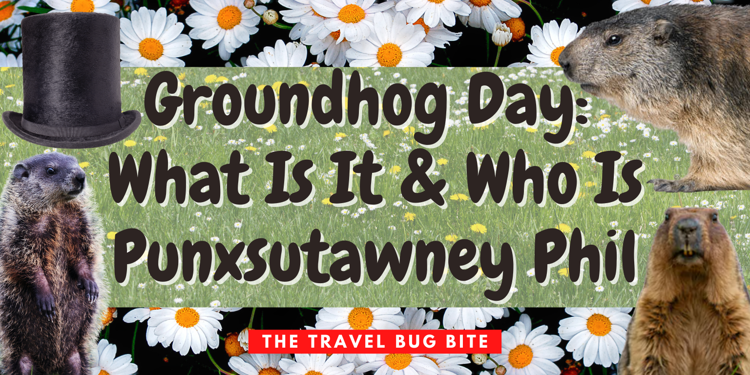Groundhog Day, Groundhog Day: What Is It & Who Is Punxsutawney Phil, The Travel Bug Bite