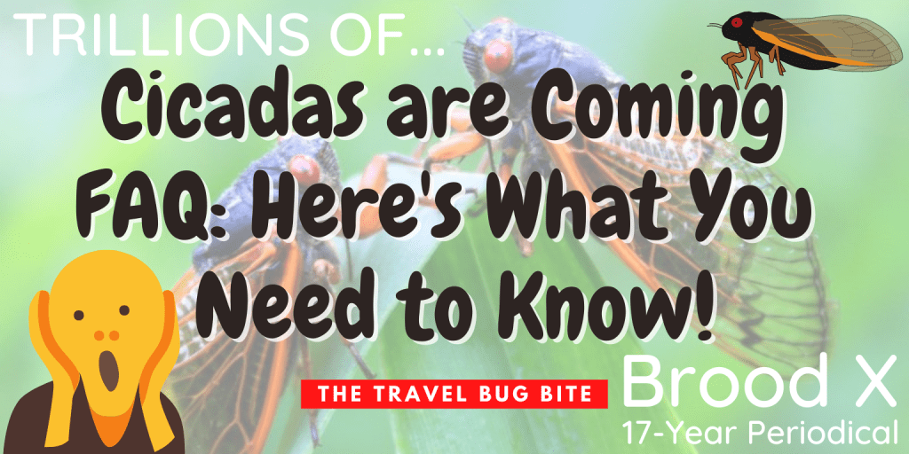 Cicadas, Cicadas are Coming FAQ: Here's What You Need to Know!, The Travel Bug Bite