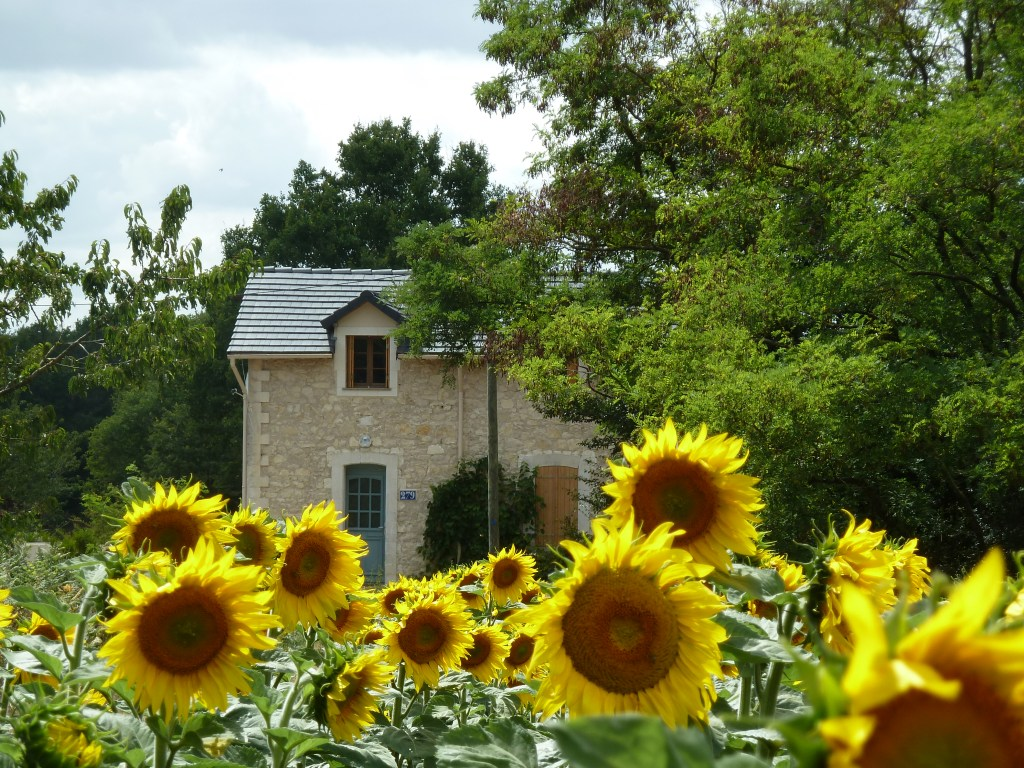 house-sunflowers