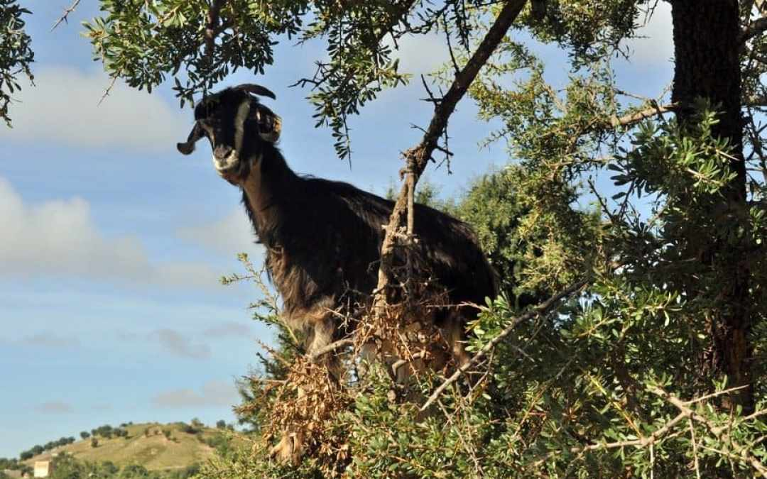 Morocco – Beaches, Berbers and Flying Goats…