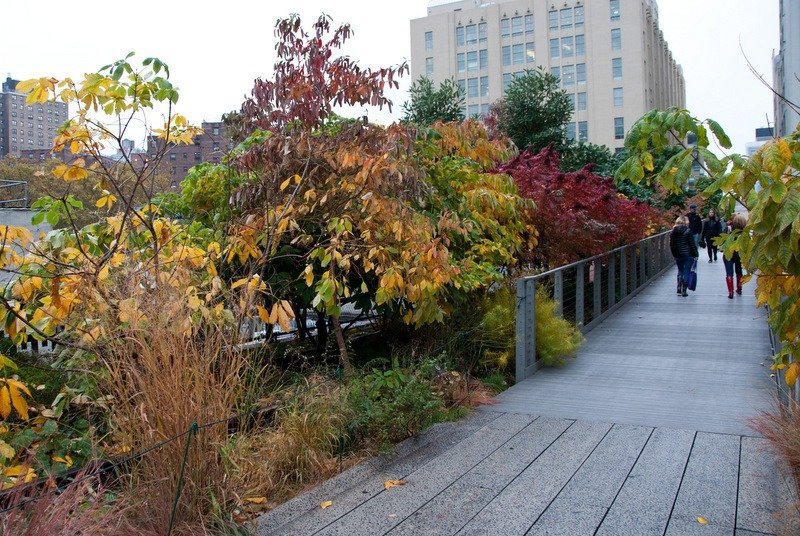 Fall Foliage on the High Line