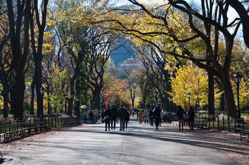 Mall-central-park-trees