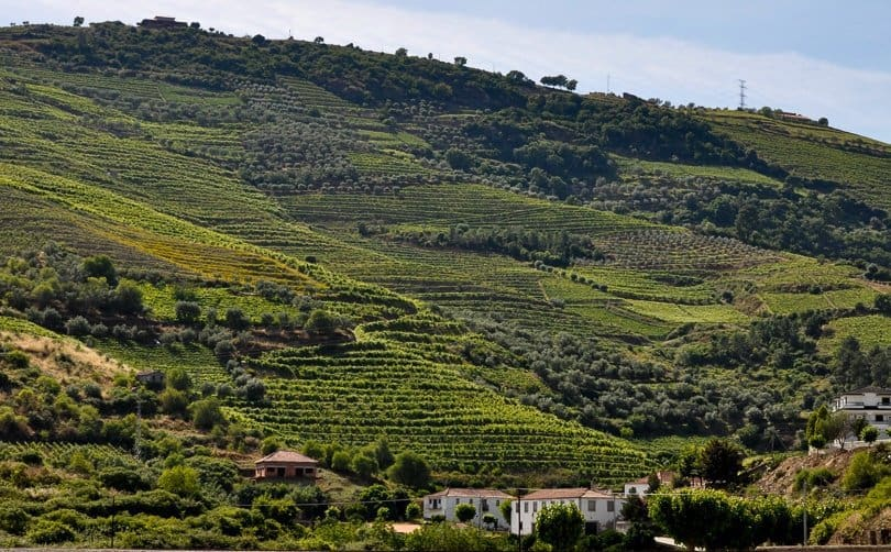 douro-valley-vineyard-terraces