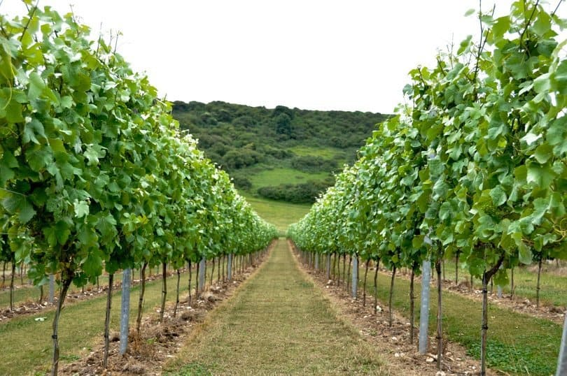 Sussex vineyards – a stay at Rathfinny Wine Estate
