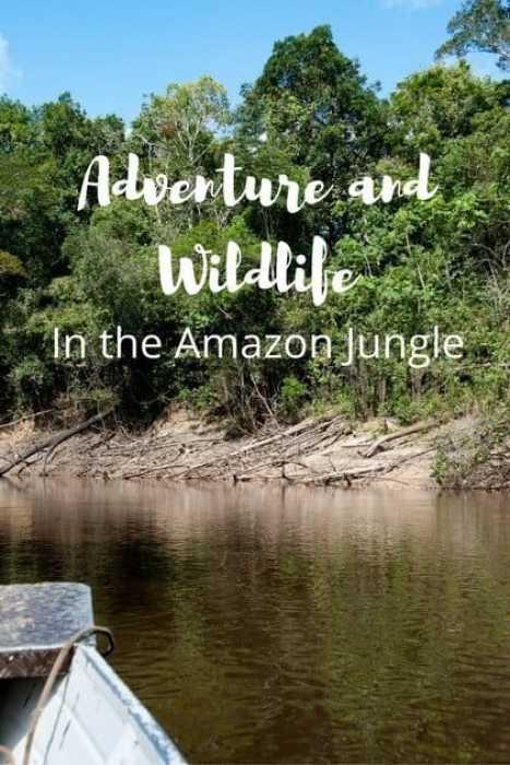 adventure-in-the-amazon-jungle