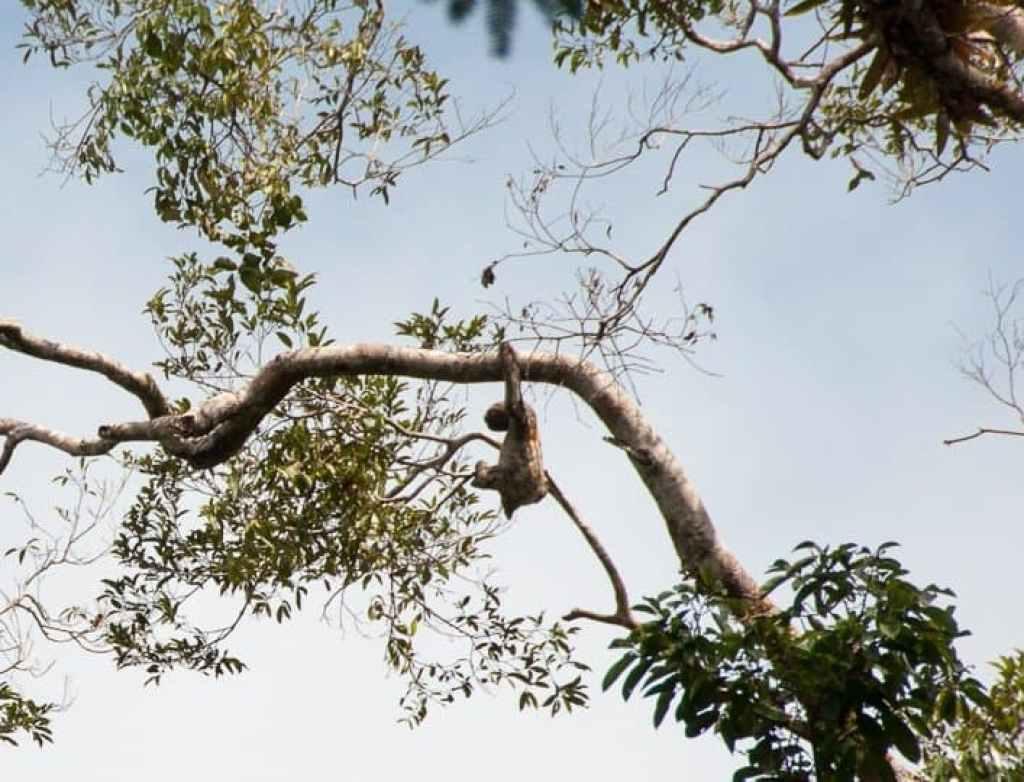 sloth-amazon-jungle