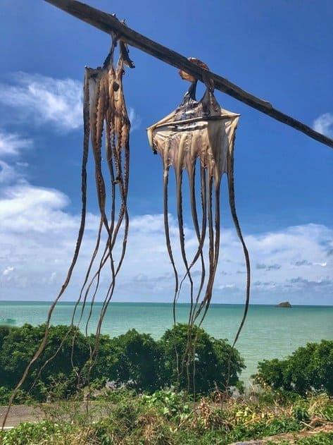 octopus-rodrigues-island