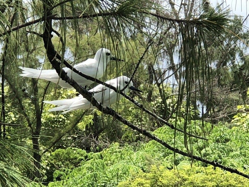 Ile-aux-Cocos-nature-reserve