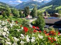 Alpbach Alpine valley with flowers in foreground