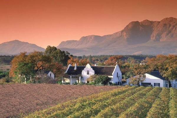 Touring the Winelands of South Africa with a Master Sommelier