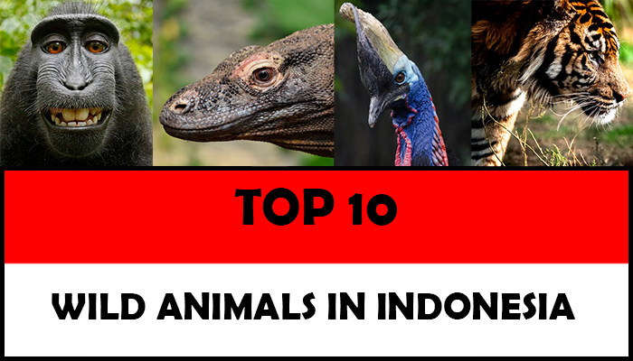 animals-that-are-endangered-in-indonesia