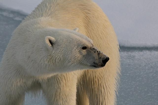 threatened-animals-in-norway