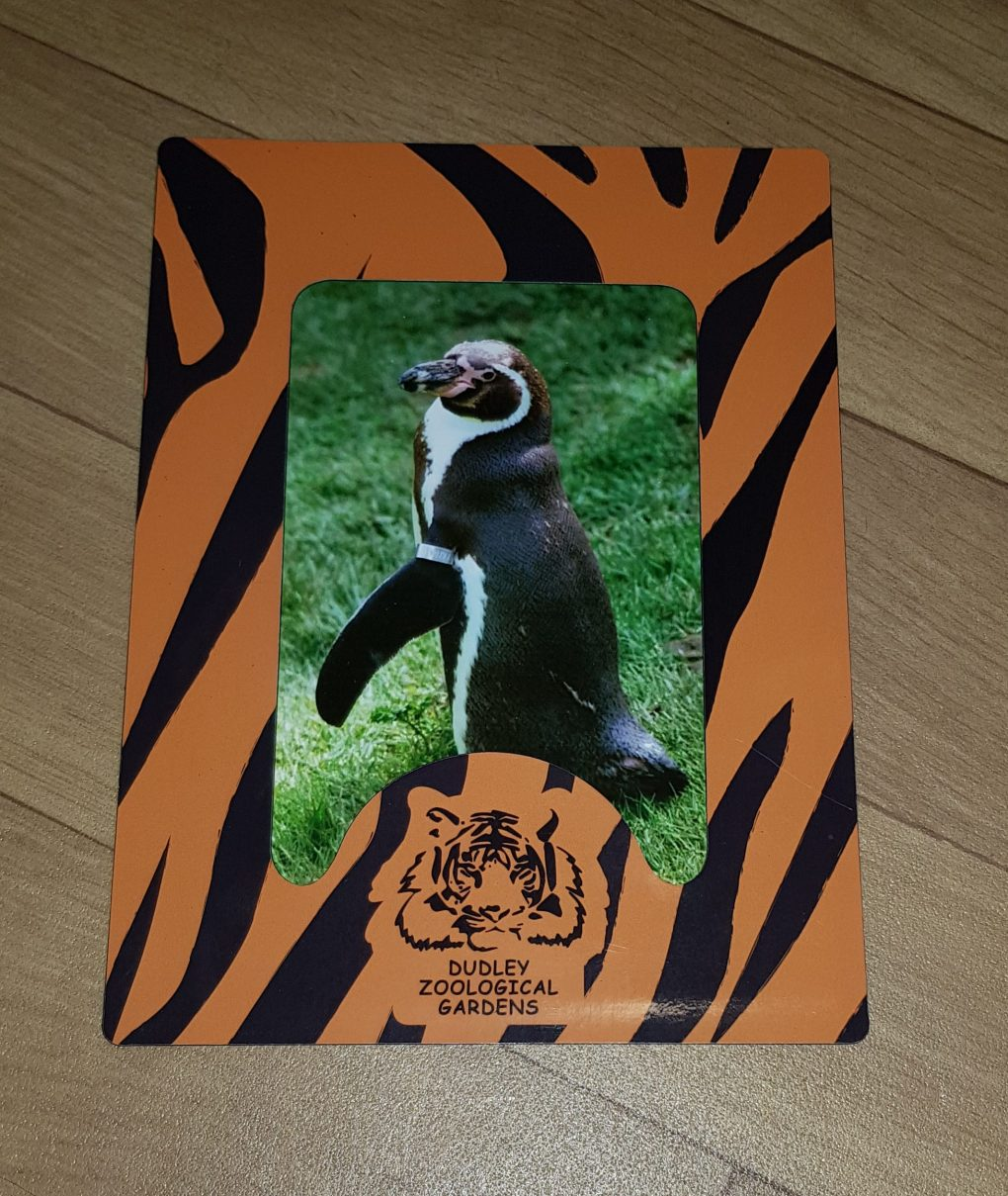 The picture that came with the penguin adoption pack from Dudley Zoo. A picture of a penguin is in a black and orange striped frame which says Dudley Zoological gardens at the bottom