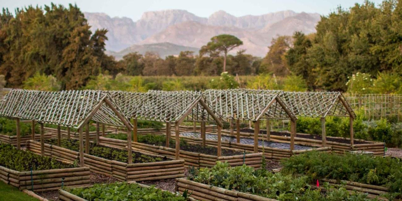 Wine tasting Südafrika Boschendal Farm-2