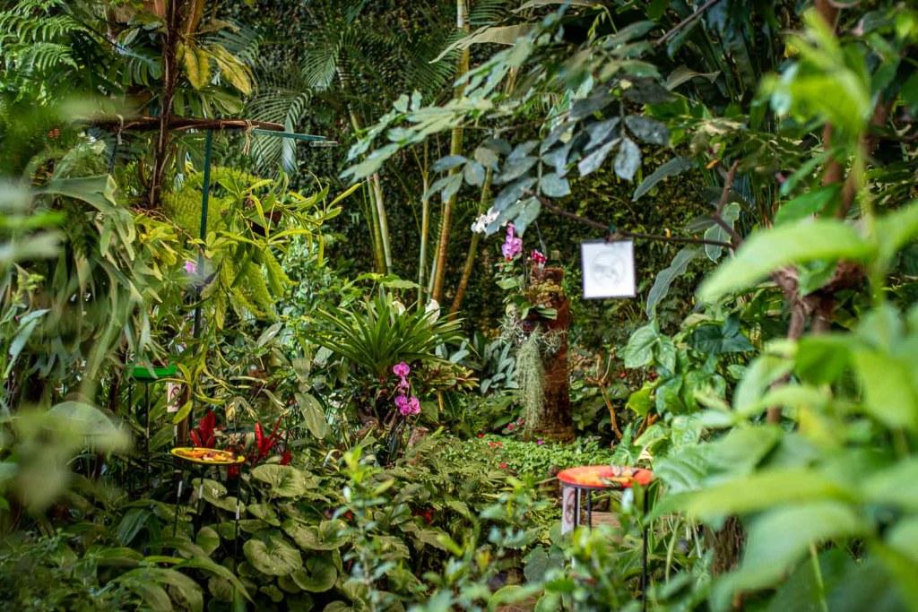 Schmetterling Haus Icod de los vinos teneriffa-3