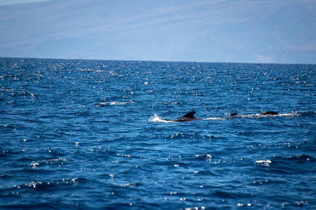 Teneriffa urlaub tipps wale delfine tour-4
