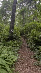 Watchung Reservation Trails