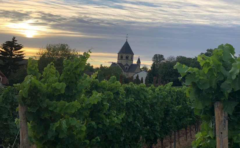 An August walk in the vineyards…