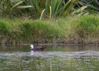 2016 04 01 Sail Day 3 Urupukapuka Bird Blind-100-121