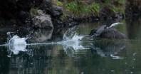 2016 04 08 Sail Day 10 Dinghy Wairakau Stream-18