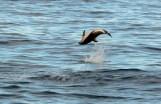 2016 05 05 Kaikoura Whales-243