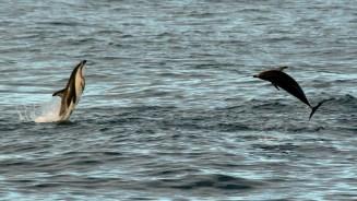 2016 05 05 Kaikoura Whales-269